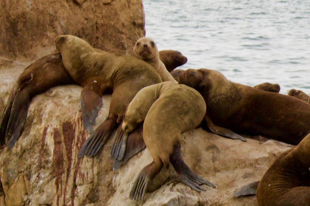 sea lion faces - 3.jpg