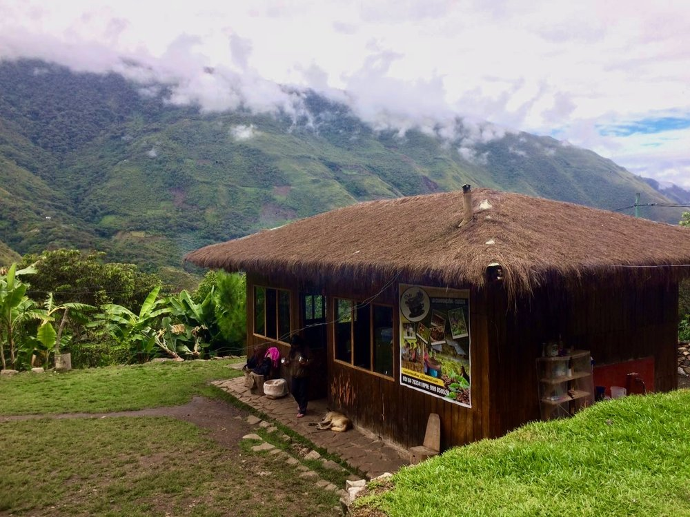 salkantay trek lucmabamba coffee plantation