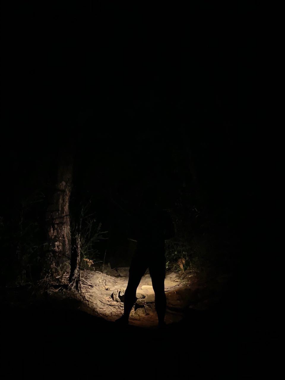 december 2018 monthly review - fireflies