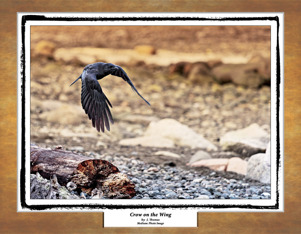 16-08 crow Calender 11.25 x 8.75.jpg