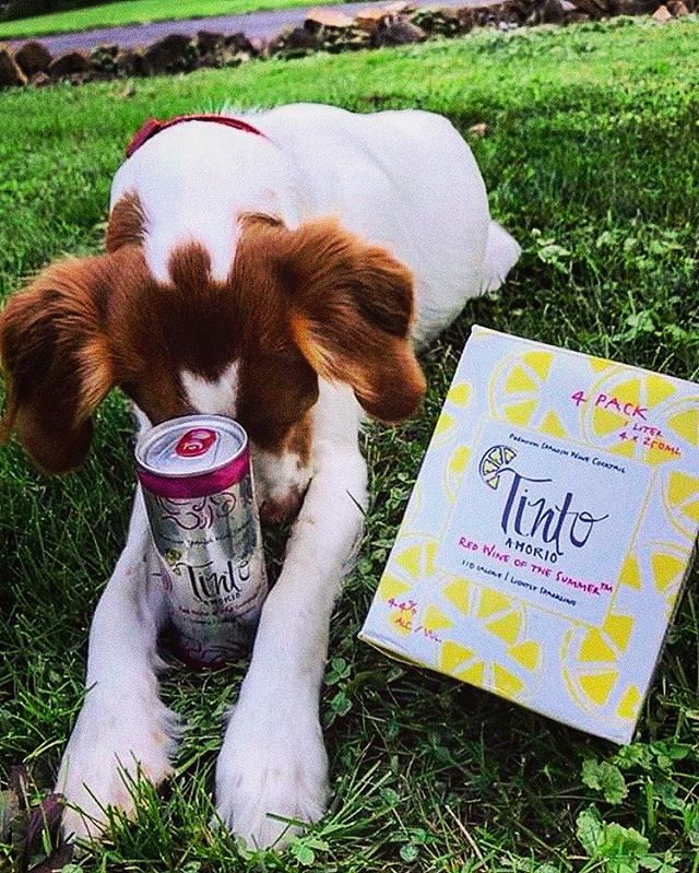 It's the #seasonofgratitude and we're so thankful for EVERYTHING...but we're especially thankful for user submitted content (with pups🐶)! .... Thank you to all of our supporters and a special shoutout to all the unsung hero's behind the scenes, directly or indirectly across the supply chain - from the warehouse managers, delivery men and women, the receivers at our grocery partners, the production labor, our marketing reps, to the farm hands that harvest the fruit. We love all of you🧡, and we are grateful for you and all that you do! ... Disclaimer: no pups were harmed in the generation of these images, and we do not recommend allowing your pups to drink alcohol.
