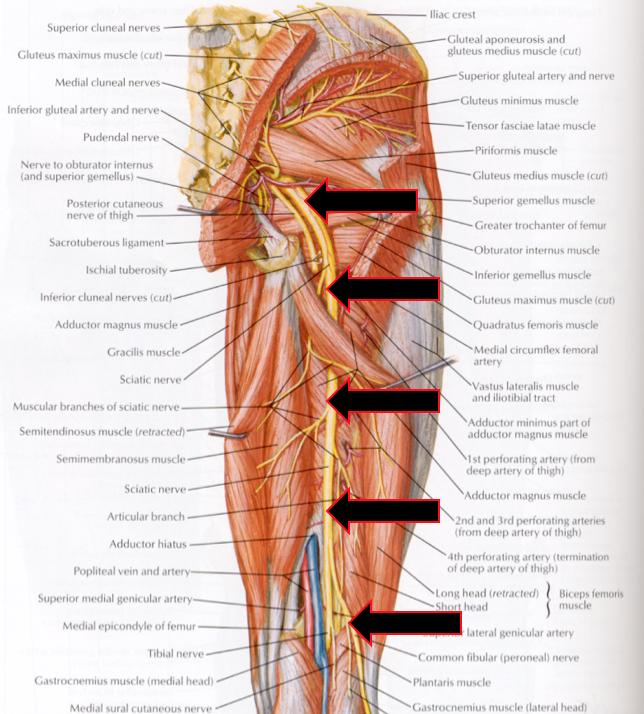 Sportsmediscussion Sports Medicine Articles Technique Daily