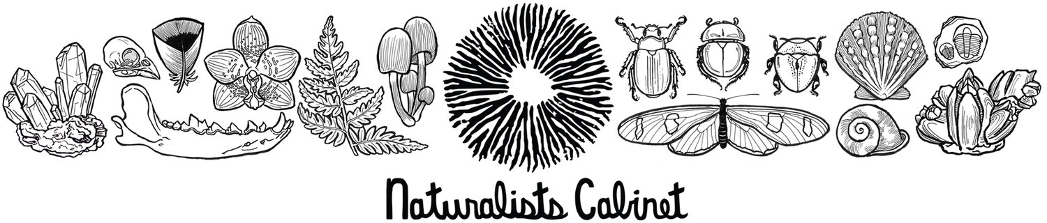 Naturalists Cabinet