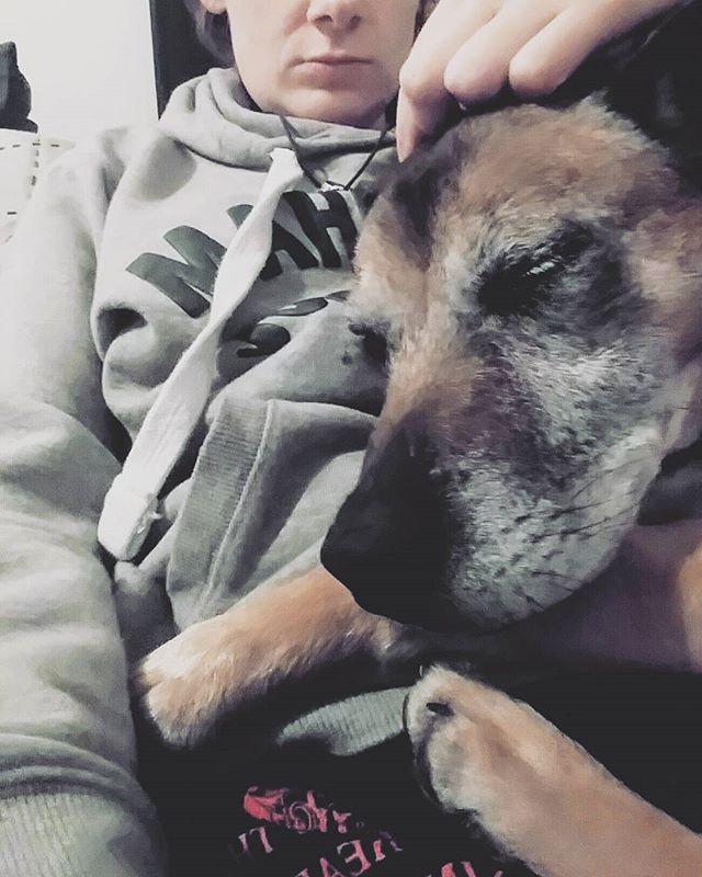 Wee Rusty making flu season a little more bearable #rustorbust #puppylove