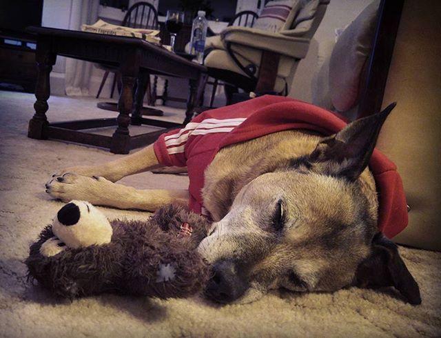 Sweetboy is sweet #rustorbust #bigscarystaffie #ilovemydog #noreallyitisaproblem