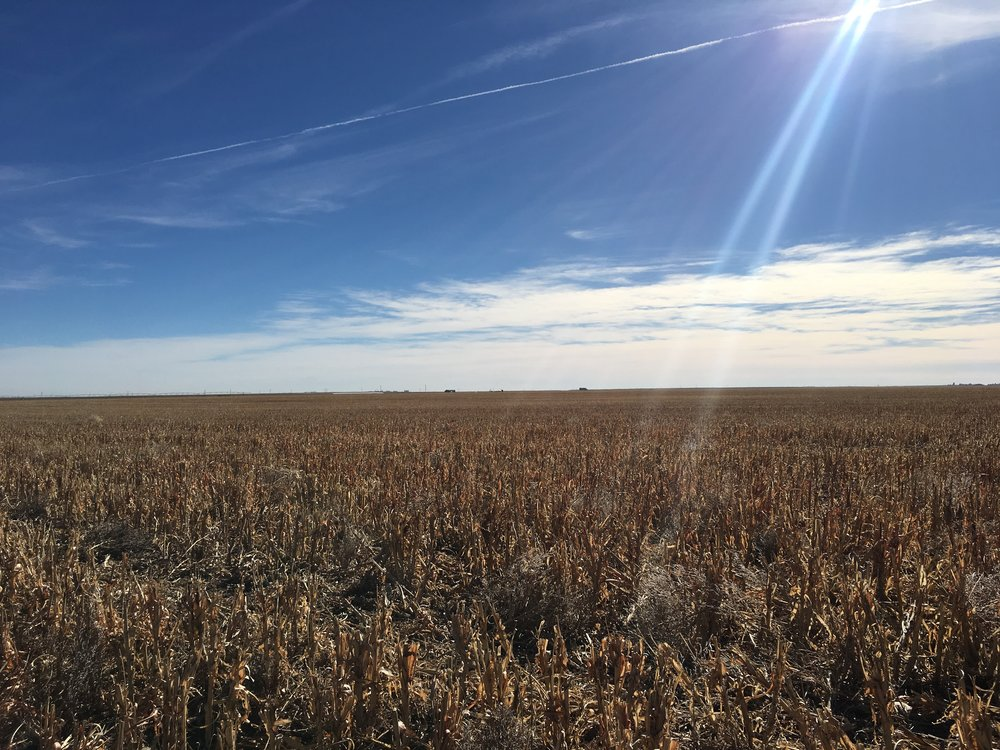 Cultivated playa in western KS - soon to be restored and taken out of agricultural production.