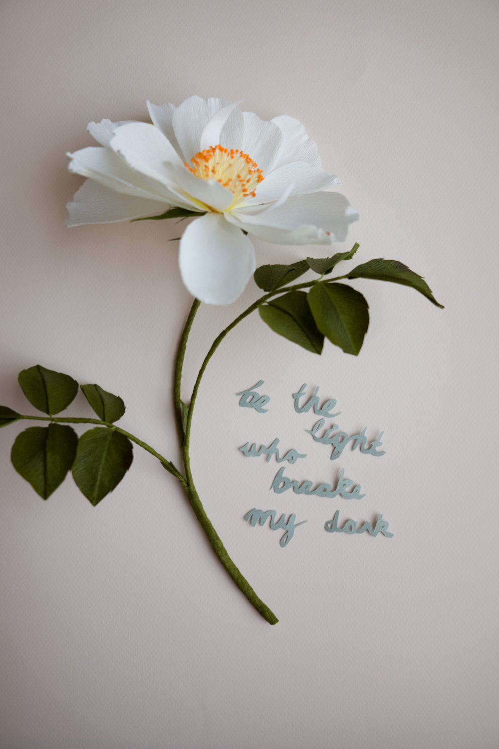 Rosa Alba Semi-Plena with handcut paper calligraphy quote
