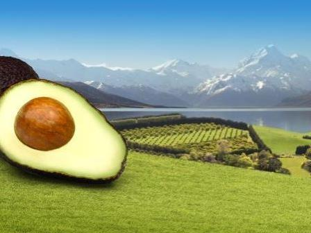 NZ Avocado Image