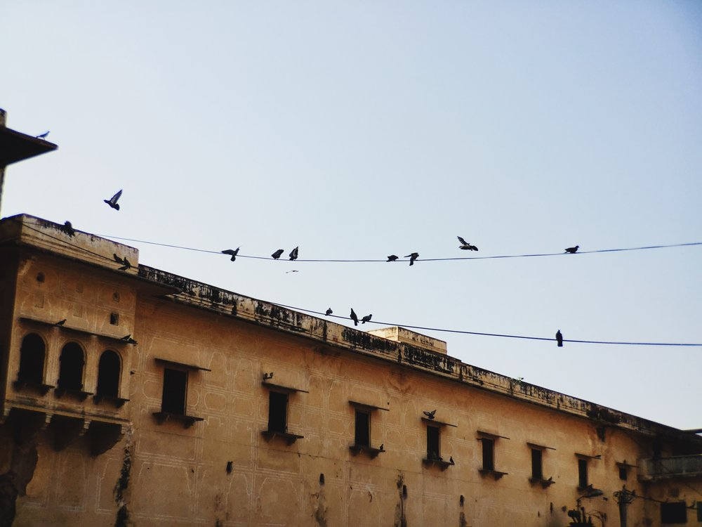The McHowe World Tour - Part II- Jaipur the Pink City - City wandering