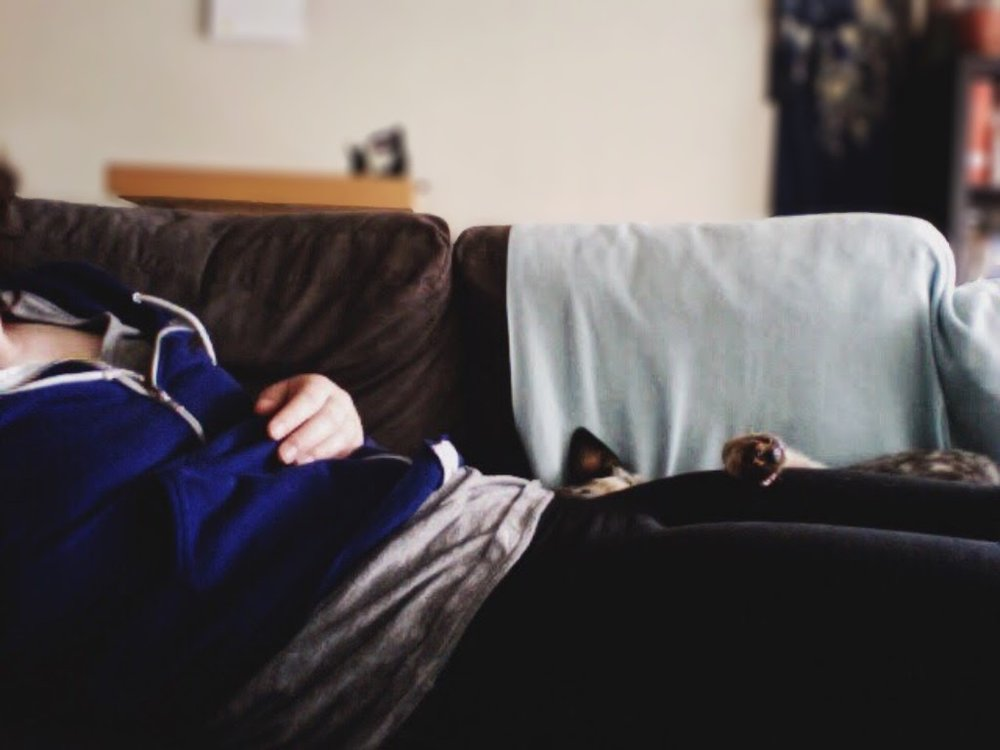 Mckee Houdini - rescued blue heeler puppy