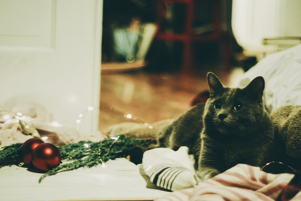 A Festive Friendship Feast for the holidays- the cat intern