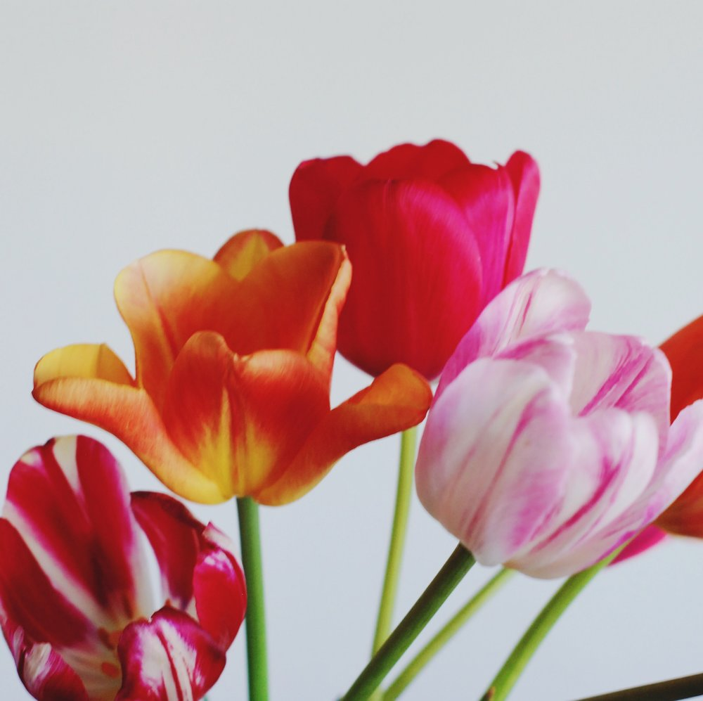 Friday I'm in love with Tulips