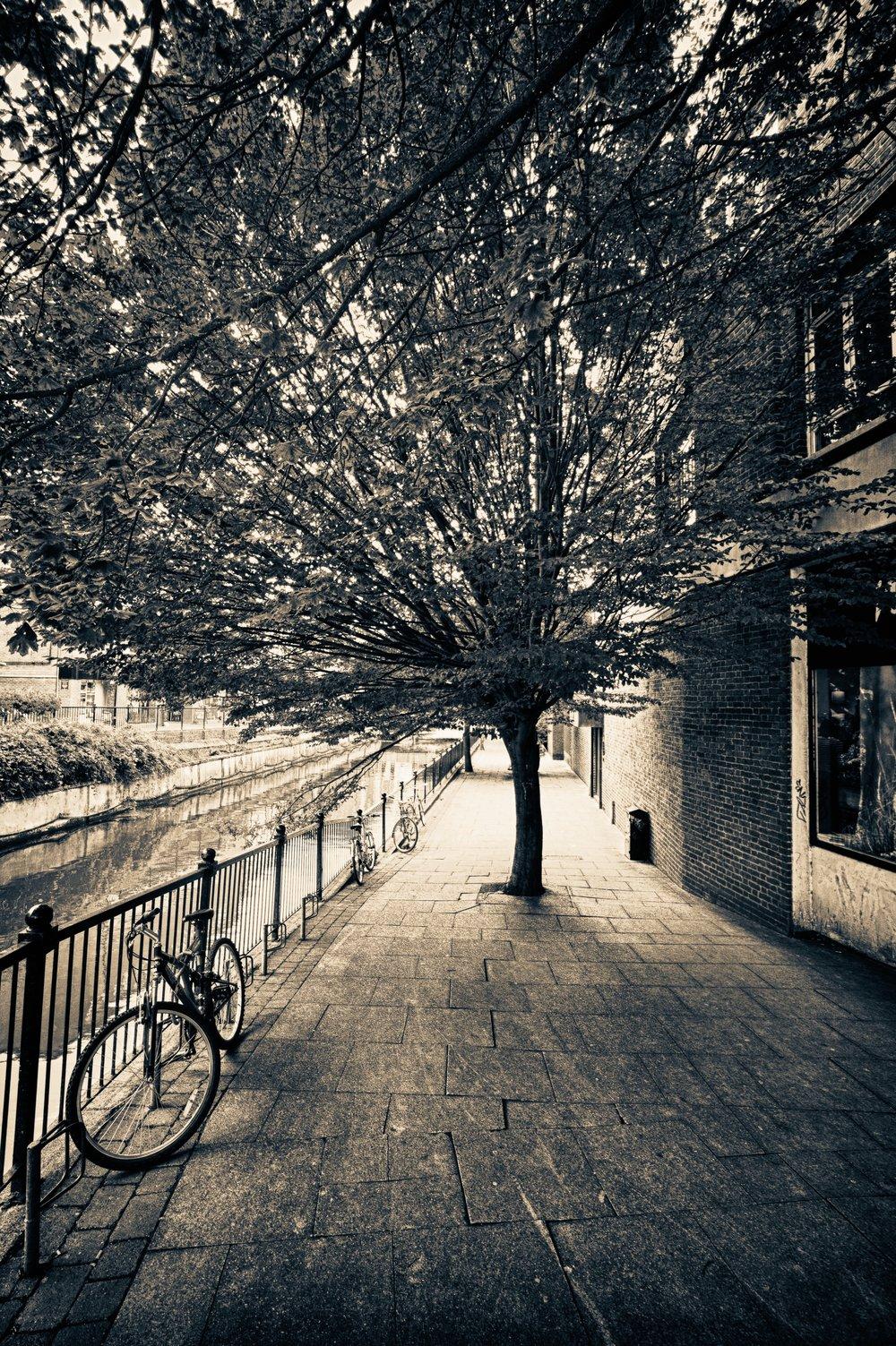 Chelmsford Tree.jpg