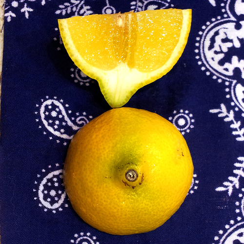 lemon crop 500