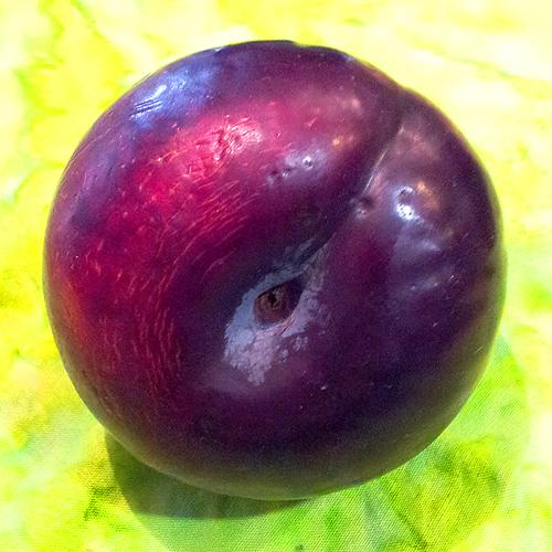 plum crop 500
