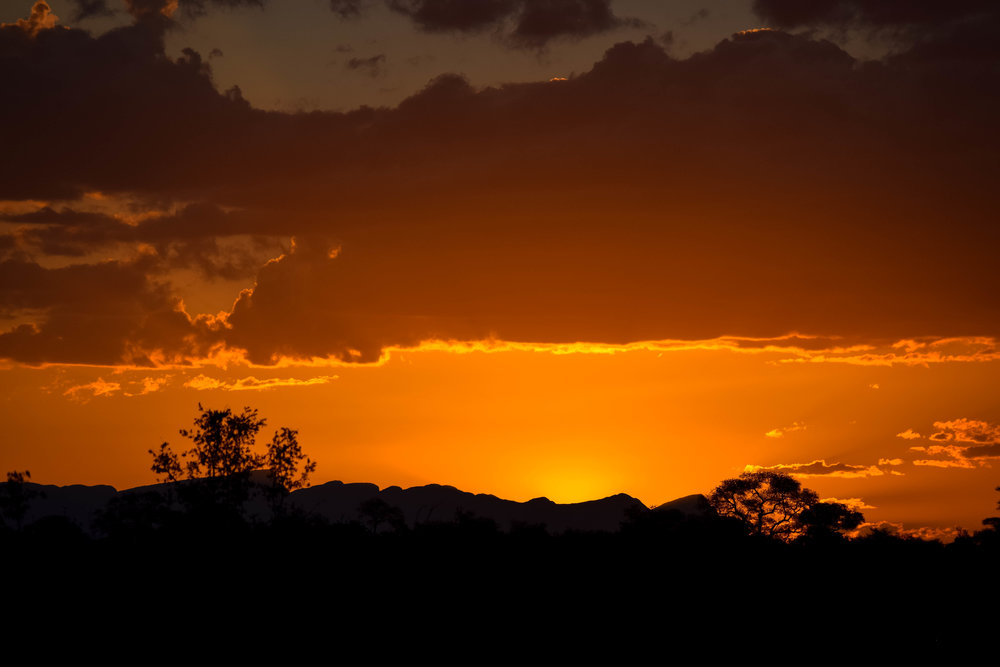 safari sunsets - doesn't get much better than this! |Timbavati game reserve|