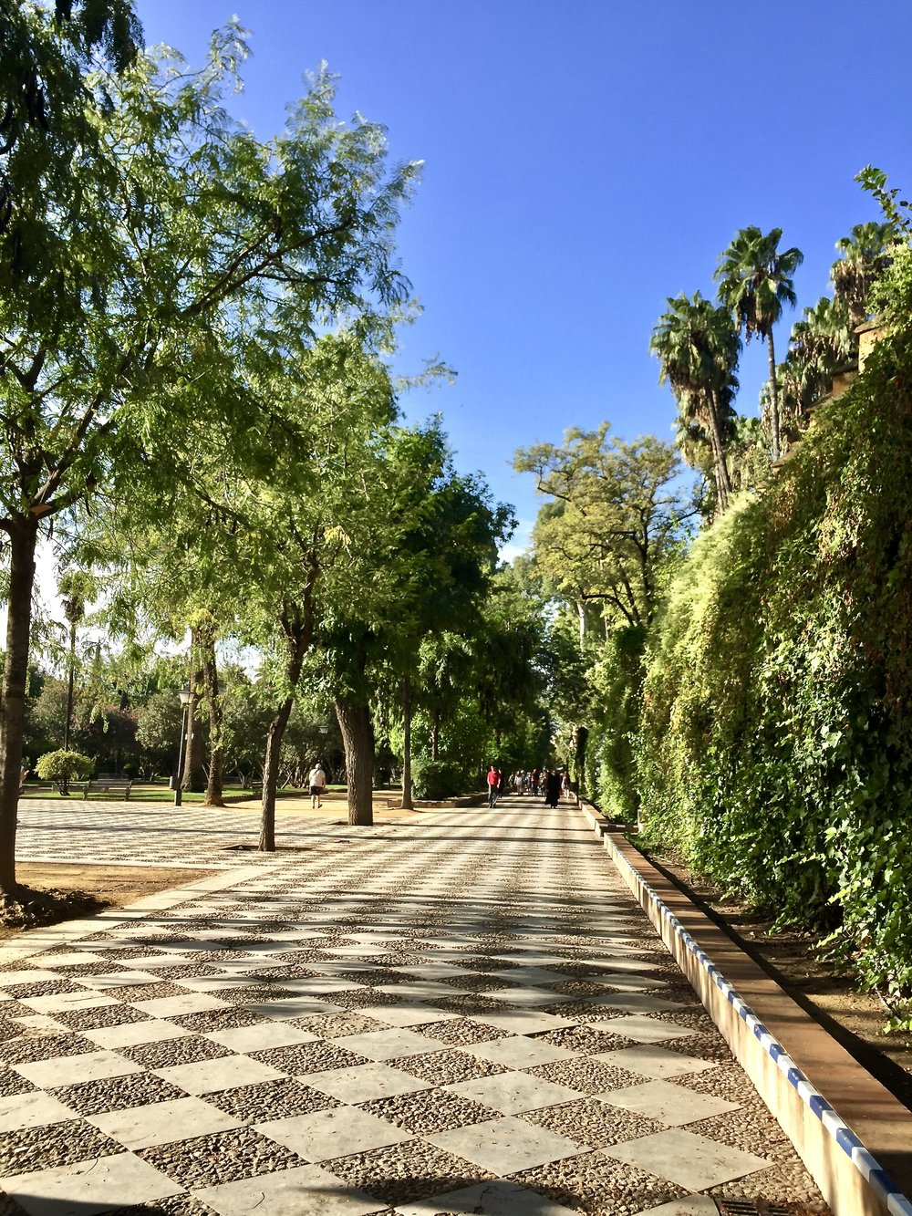 Universityof Seville area