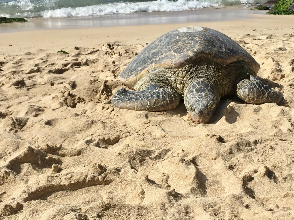 Turtle Beach Oahu