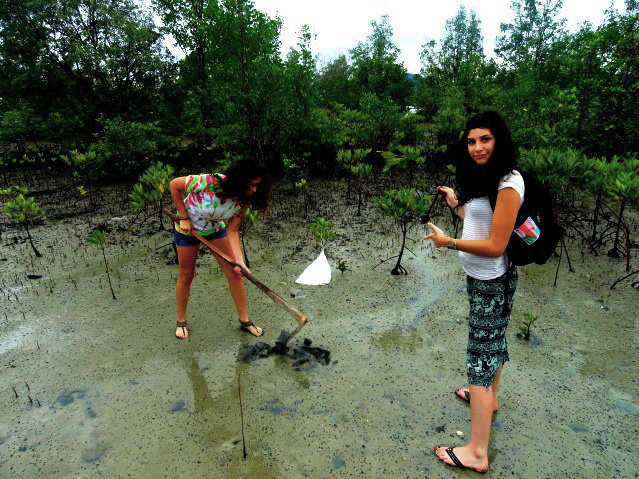 Replanting mangroves in Thailand after learning about their ability to help lower C02 levels in the atmosphere
