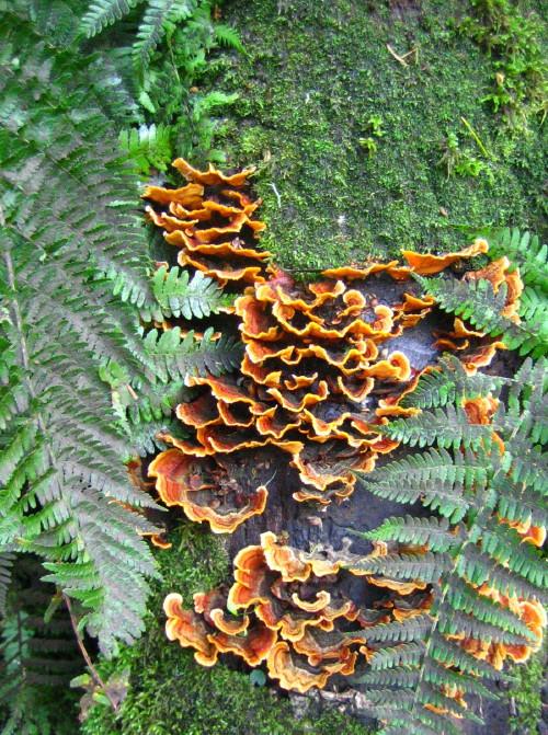 fungi_1.jpg