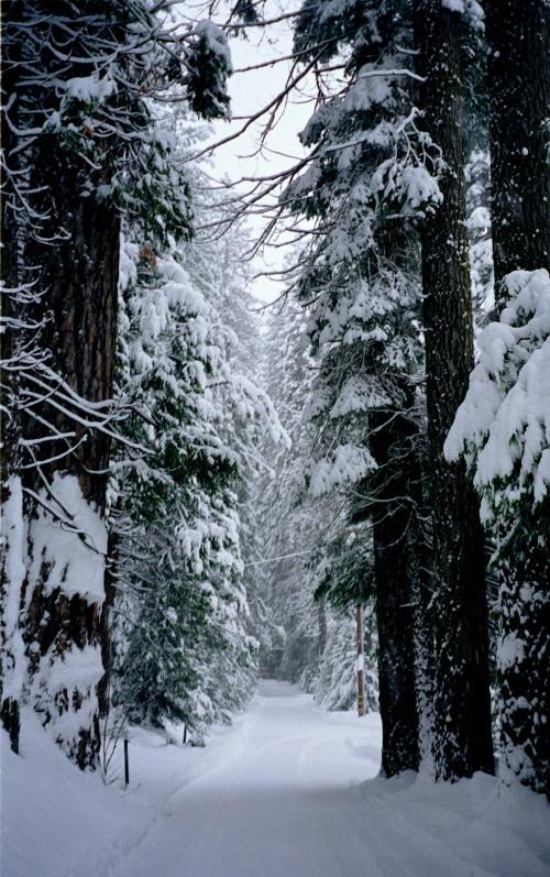snowy_road_cropped_1.jpg