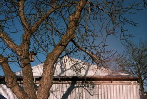 barn-tree_1.jpg