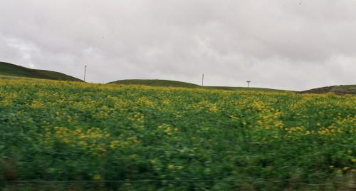 field_1.jpg