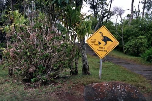 kauai-025_1.jpg