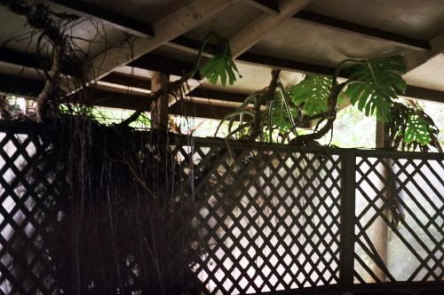 kauai-029_1.jpg
