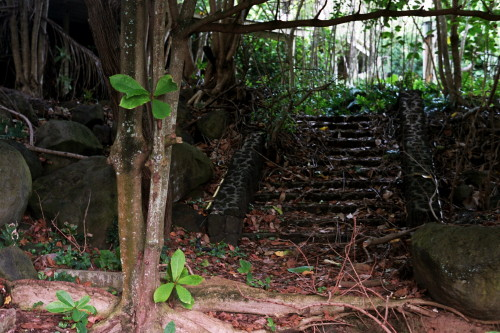 kauai-035_1.jpg