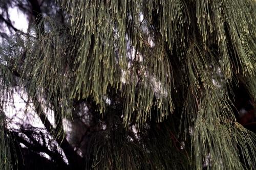 kauai-041_1.jpg