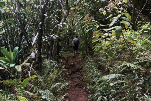 kauai-141_1.jpg