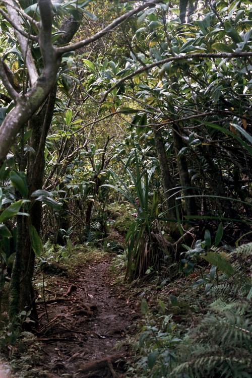 kauai-142_1.jpg