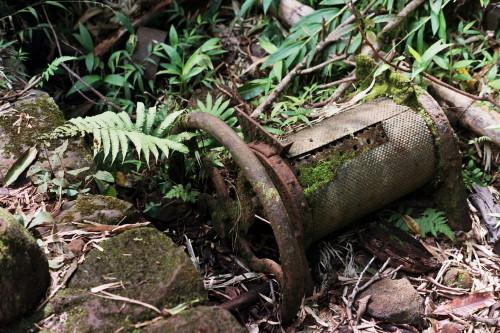 kauai-143_1.jpg