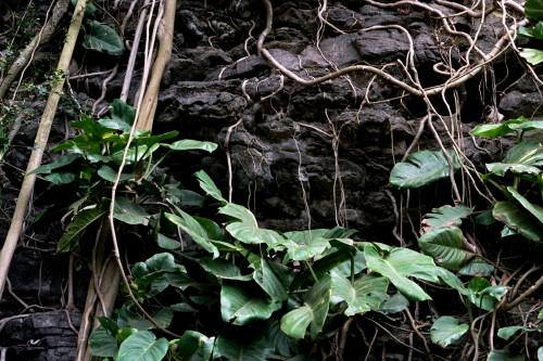kauai-161_1.jpg