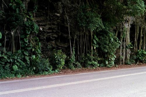 kauai-162_1.jpg