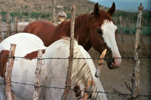 ranch-091_1.jpg