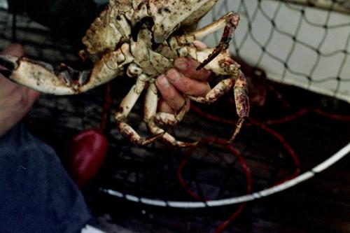 Crab Hand_1