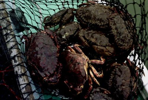 Crab Haul_1