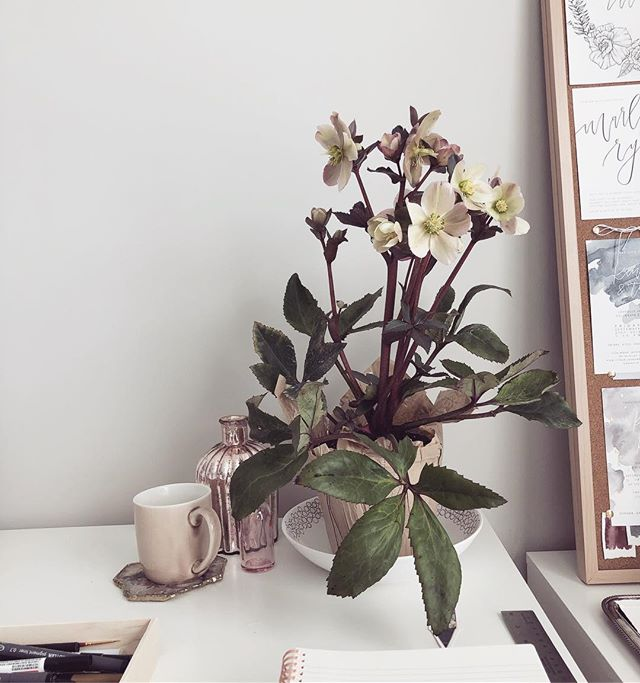 Picked up this beautiful little hellebore the other day to keep me company while I work. He's really pretty, but he doesn't have fur... or a tail 🤷🏻♀️
