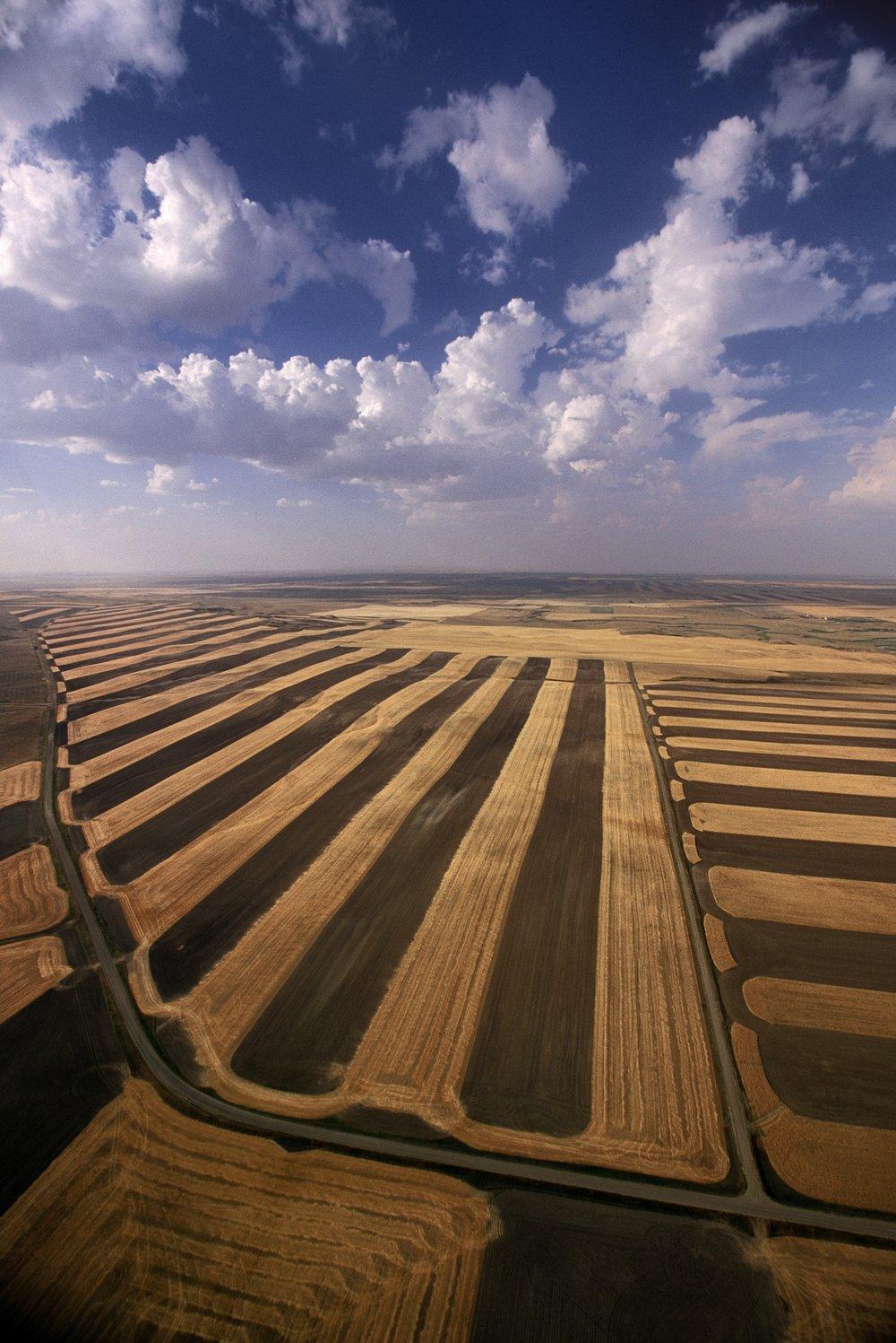 Montana Wheat 3 (PII).jpg