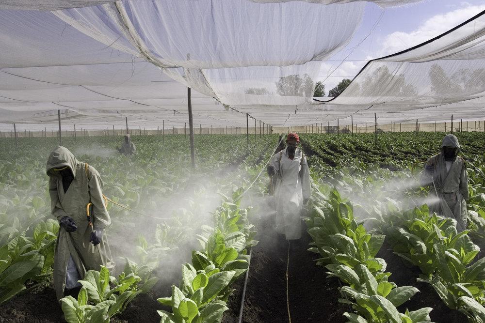 Copy of Pesticide Sprayers, Nicaragua
