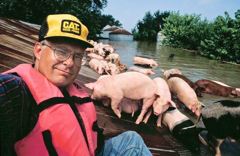 Jim with Pigs II.jpg