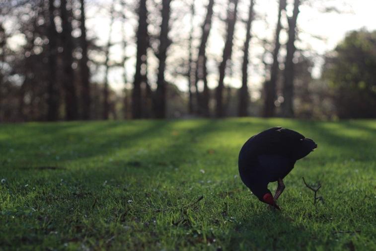 Bird (by Daniel Ahn)