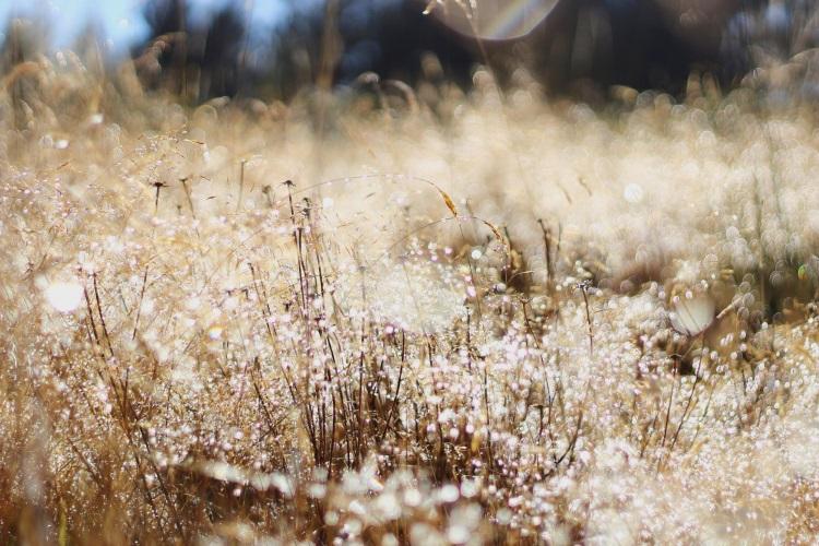 Dew (by Daniel Ahn)