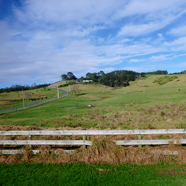The Rautawhiri Road site of the special housing area (SHA) development, pre-construction.