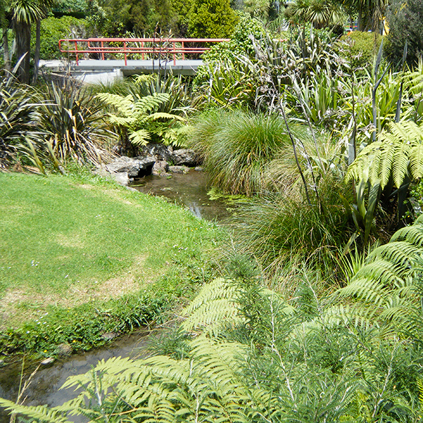 The Wairaka Stream located within Unitec grounds.