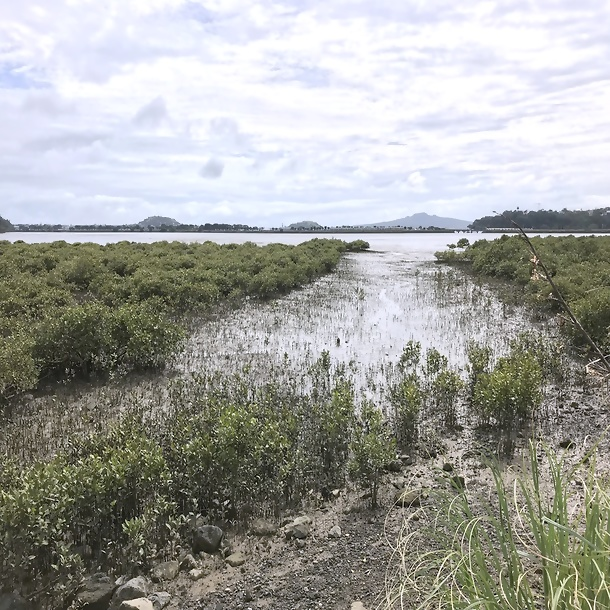 Access corridor through mangroves at Hobson Bay for recreational use
