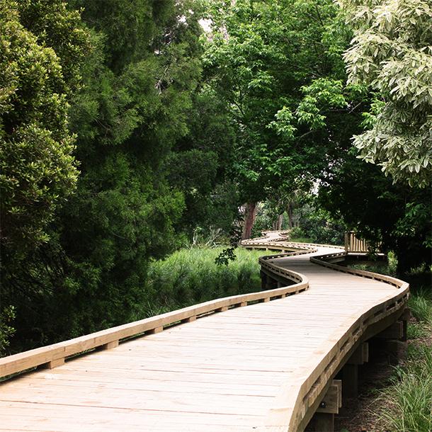 roy-clements-treeway-boardwalk-walkway.jpg