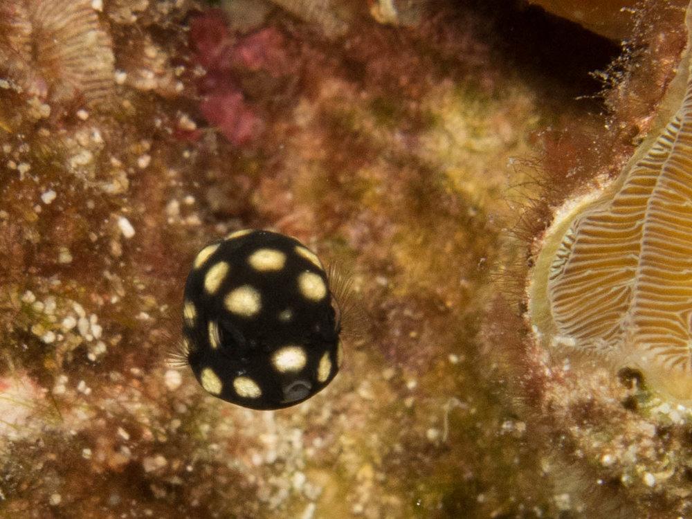 AL IU_170828_Dive Travel_0602.jpg